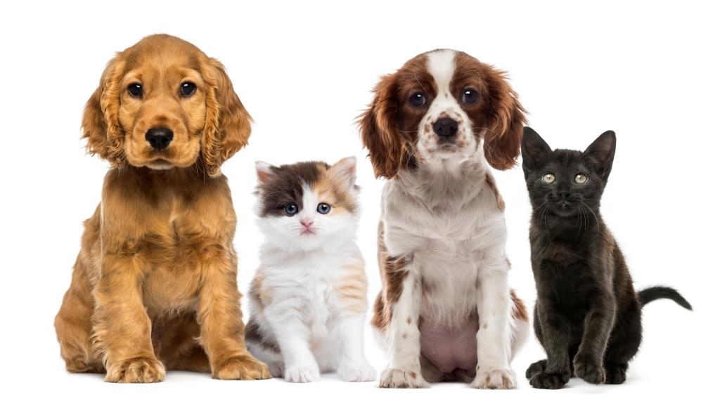 Trimcanis, beroepsvereniging voor hondenverzorging vzw