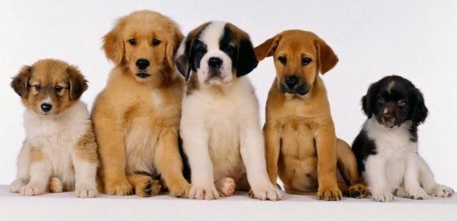 Trimcanis, beroepsvereniging voor honden en kattenverzorging vzw